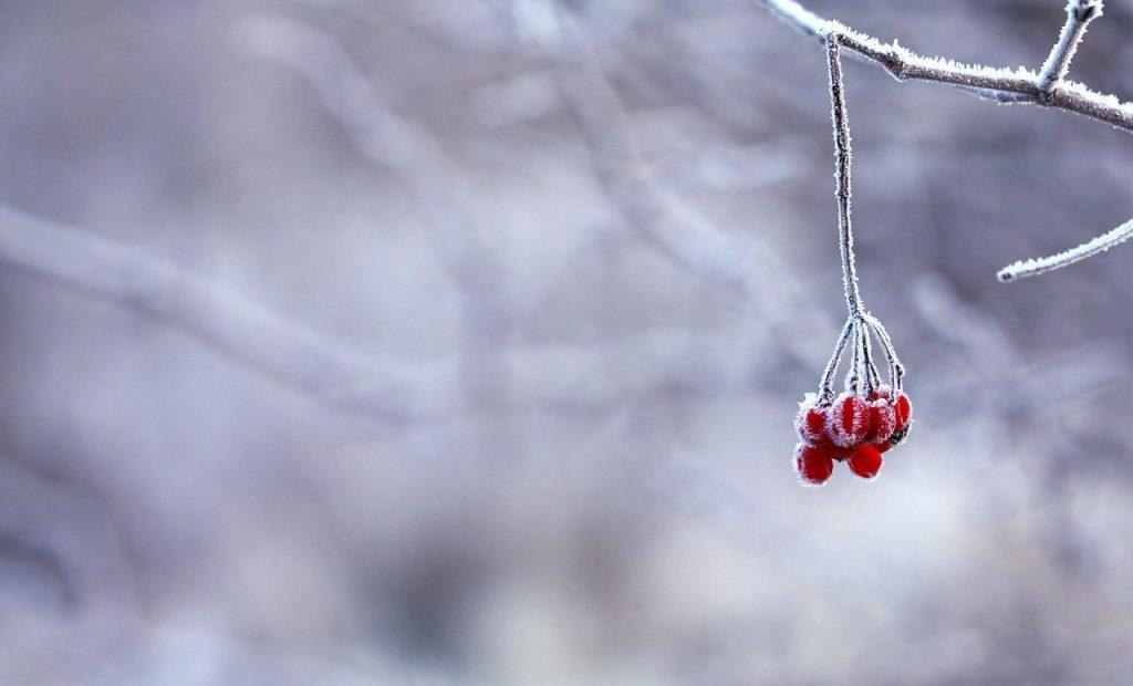 yule winter jaarwiel jaarfeest
